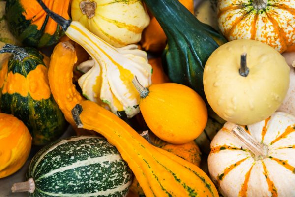 colorful ornamental pumpkins, gourds and squashes in the market